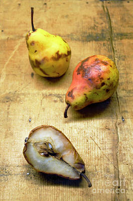 Photograph - Rotting Pears by Jill Battaglia