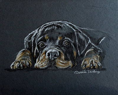 Rottweiler Puppy Drawing - Rottweiler by Daniele Trottier