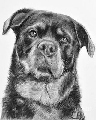 Rottweiler Drawing Titled Mama Art Print by Kate Sumners
