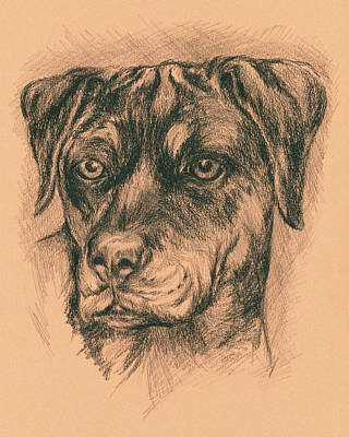 Rottweiler Mix In Charcoal Art Print by MM Anderson