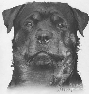 Rottweiler Dog Drawing - Rottweiler by Neil Brunton