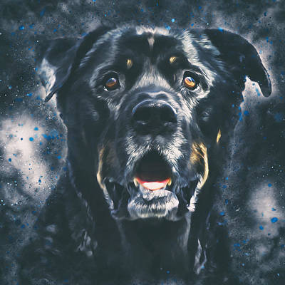 Rottweiler Portrait Art Print by Wolf Shadow  Photography