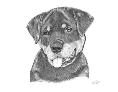 Drawing - Rottweiler Puppy- Chloe by Patricia Hiltz