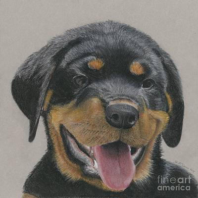 Rottweiler Puppy Art Print by Gordon McCann