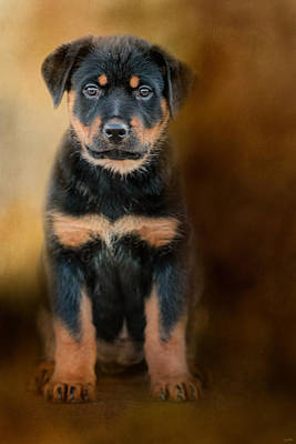 Rottweiler Puppy Art Print by Jai Johnson