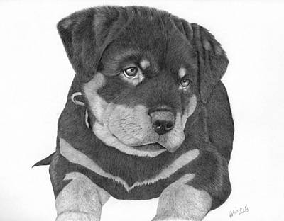 Drawing - Rottweiler Puppy by Patricia Hiltz