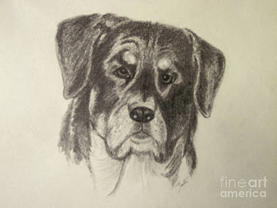 Drawing - Rottweiler by Suzette Kallen