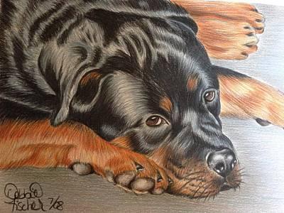 Rottweiler Puppy Drawing - Rotty by Debbie Fischer