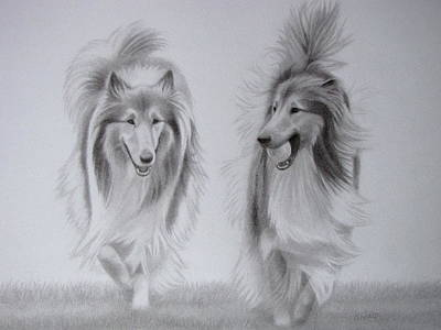 Dog Trots Drawing - Rough Collie Sisters by Karen Wood