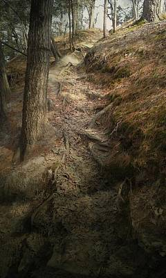 Forest Photograph - Rough Path by Sue Midlock