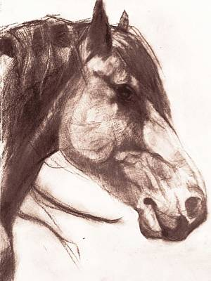 Drawing - Rough Stock  by Michele Carter