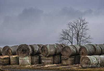 Photograph - Round Baled by Joann Long