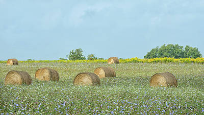 Photograph - Round Bales In The Field  by CR Courson