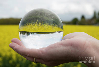 Photograph - Round Glass Ball Rapeseed Field by Compuinfoto