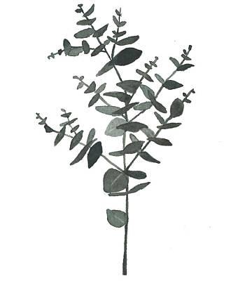 Painting - Round Leaf Eucalyptus  by Garima Srivastava
