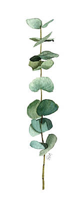 Painting - Round Leaf Eucalyptus Twig by Garima Srivastava
