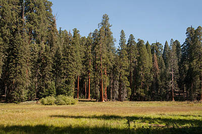 Photograph - Round Meadow Sequoia National Park by NaturesPix