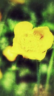 Photograph - Round Yellow by Isabella F Abbie Shores
