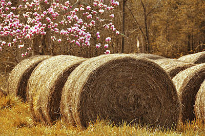 Photograph - Rounded Bales by JAMART Photography