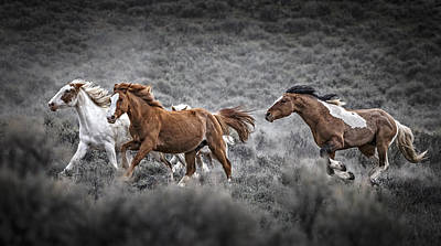 Forelock Photograph - Rounding Up The Mares by Wes and Dotty Weber