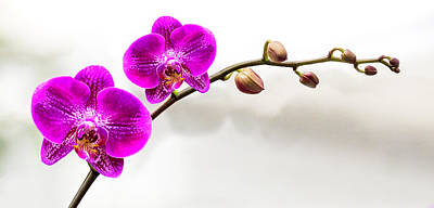 Photograph - Rountree Orchid 2016 04 by Jim Dollar