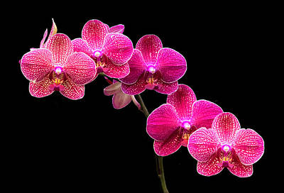 Photograph - Rountree Orchid 2016 10 by Jim Dollar