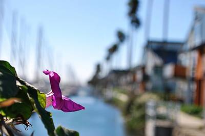 Photograph - Row Of Beach Houses - Harbor View Purple Flower Foreground by Matt Harang