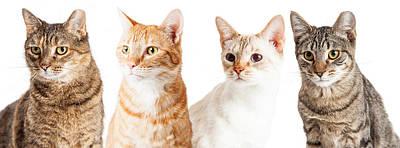 Row Of Cats Closeup Art Print by Susan Schmitz
