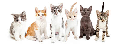 Adorable Photograph - Row Of Cute Kittens Together by Susan Schmitz