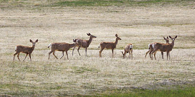 Photograph - Row Of Deer  by Natalie Rotman Cote