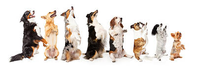 David Bowie Royalty Free Images - Row of dogs sitting up to side begging Royalty-Free Image by Good Focused