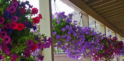 Overhang Digital Art - Row Of Flower Baskets by Steve Ohlsen