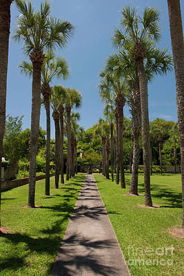 Photograph - Row Of Palms by Dale Powell