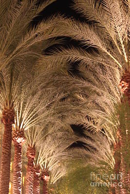 Photograph - Row Of Palms by Terri Thompson