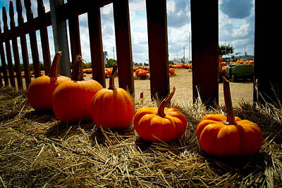 Photograph - Row Of Pumpkins Sitting by Marisela Mungia