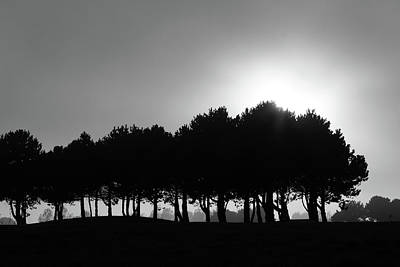 Photograph - Row Of Trees by Aidan Moran
