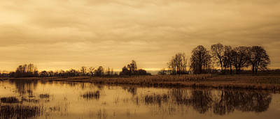 Photograph - Row Of Trees Along The Pond by Don Schwartz