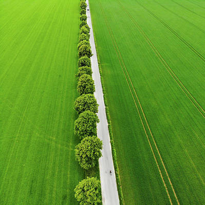 Photograph - Row Of Trees And Green Fields Aerial View by Matthias Hauser