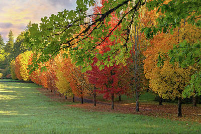Photograph - Row Of Trees In Peak Fall Colors by David Gn