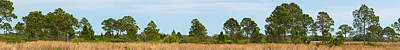 In A Row Photograph - Row Of Trees In Sarasota, Florida, Usa by Panoramic Images