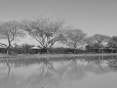 Photograph - Row Of Trees Near The Pond by Esther Newman-Cohen