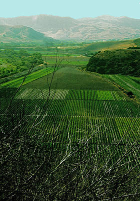 Photograph - Rows Of Crops by Gary Brandes