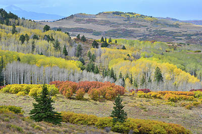 Photograph - Rows Of Fall Color On Last Dollar Road by Ray Mathis