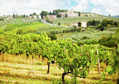 Photograph - Rows Of Grapes In Tuscany Italy Vineyard by Susan Schmitz