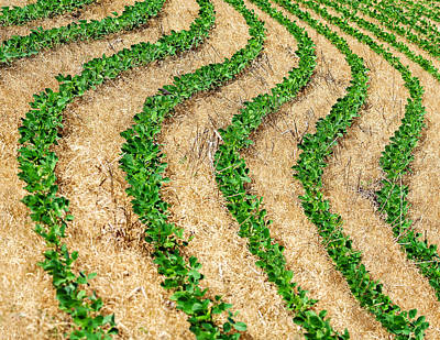 Rows Of Green Art Print