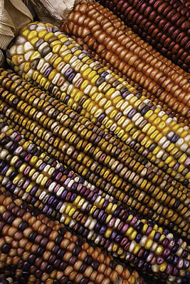 Indian Corn Wall Art - Photograph - Rows Of Indian Corn by Garry Gay