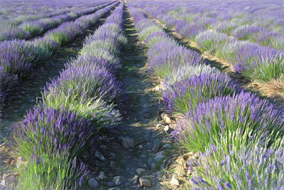 Photograph - Rows Of Lavender 2 by Donna Kennedy