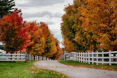 Photograph - Rows Of Maples In Fall Colors by Jeff Folger