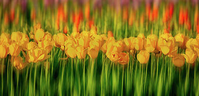 Photograph - Rows Of Tulips Blurred by Jerry Fornarotto
