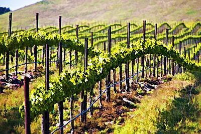 Vineyard Digital Art - Rows Of Vines by Patricia Stalter